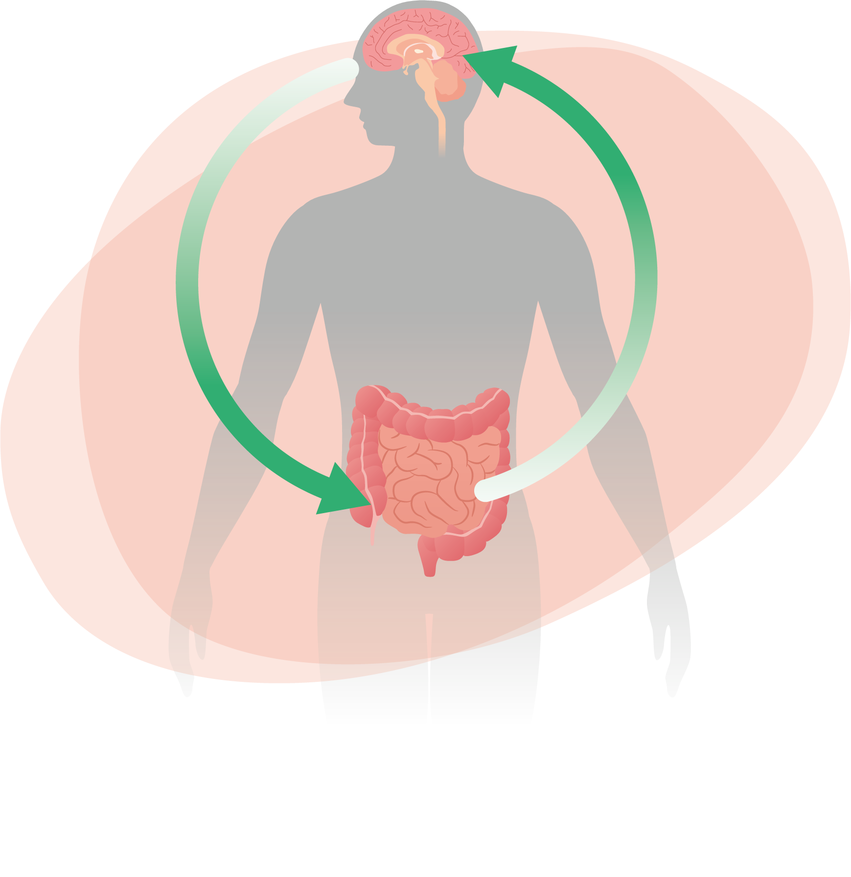 Reuflor Asse cervello intestino